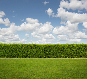 Growing a Privacy Hedge